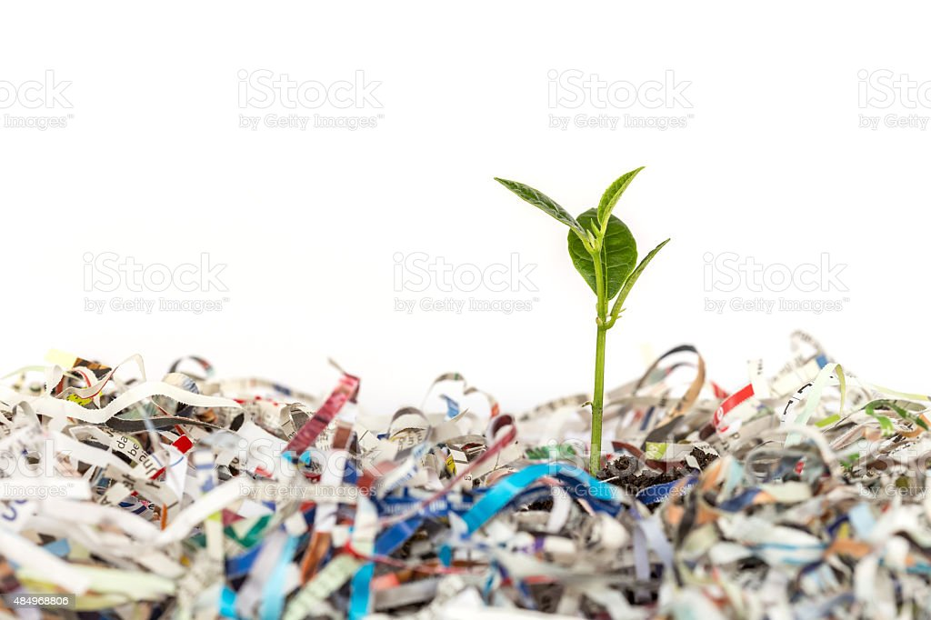 Young green plant in stack of scrap paper stock photo