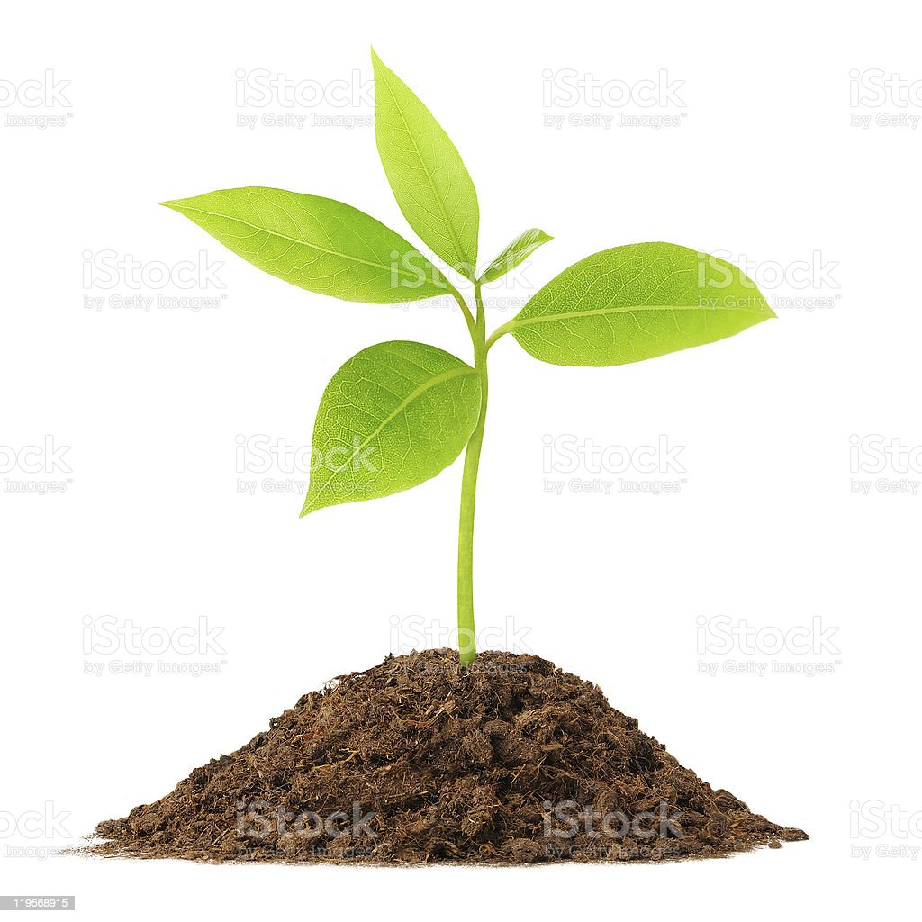 Young green plant stock photo