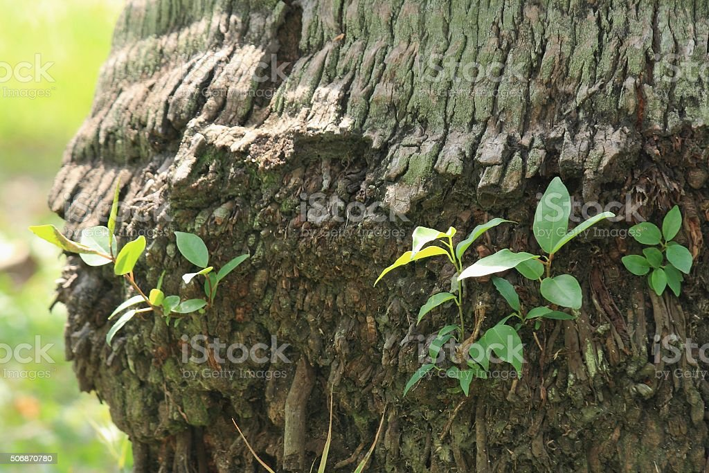 young green plants. stock photo
