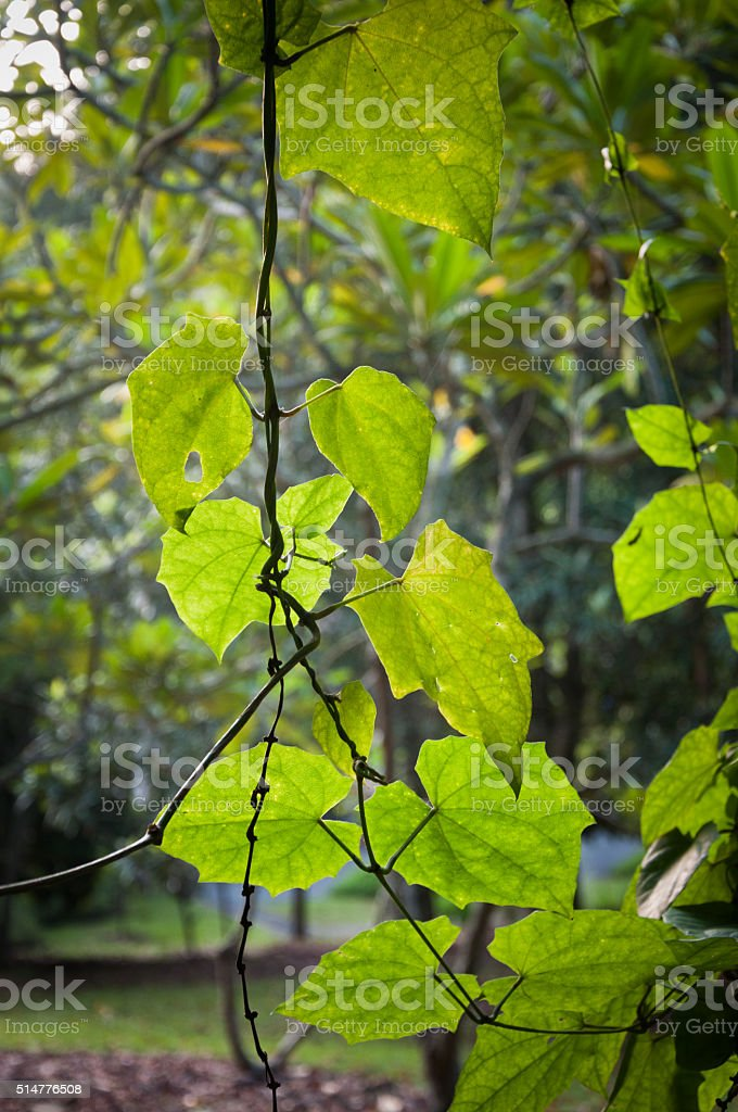Young green spring leaves background. stock photo