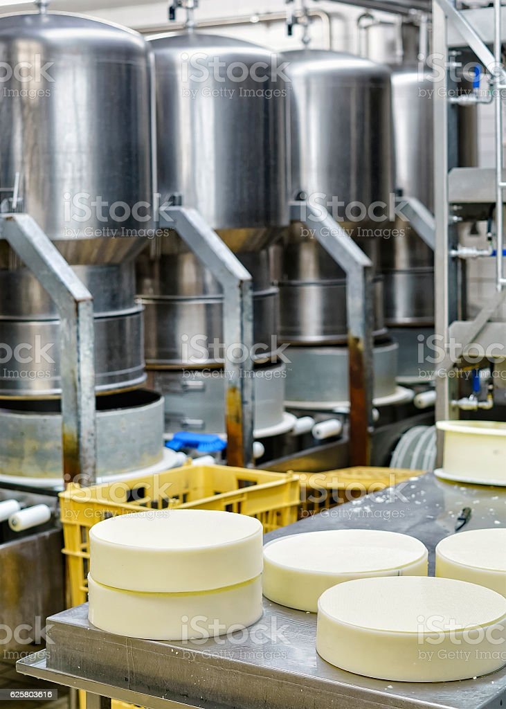 Young Gruyere Comte Cheese pressed in special forms at dairy stock photo