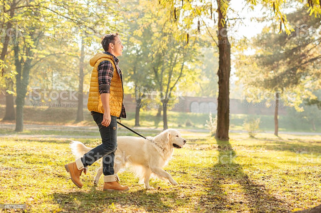 Young guy walking his dog in a park stock photo