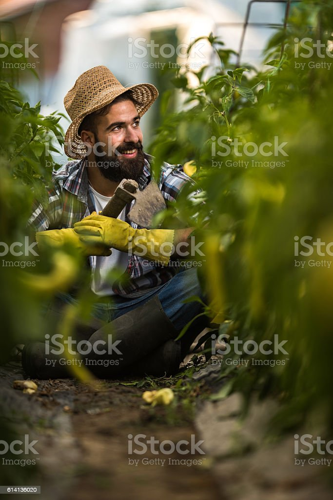 Young happy farmer taking a break from gardening in greenhouse. stock photo