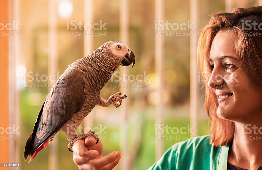 Young happy woman holding a gray parrot on her hand. stock photo