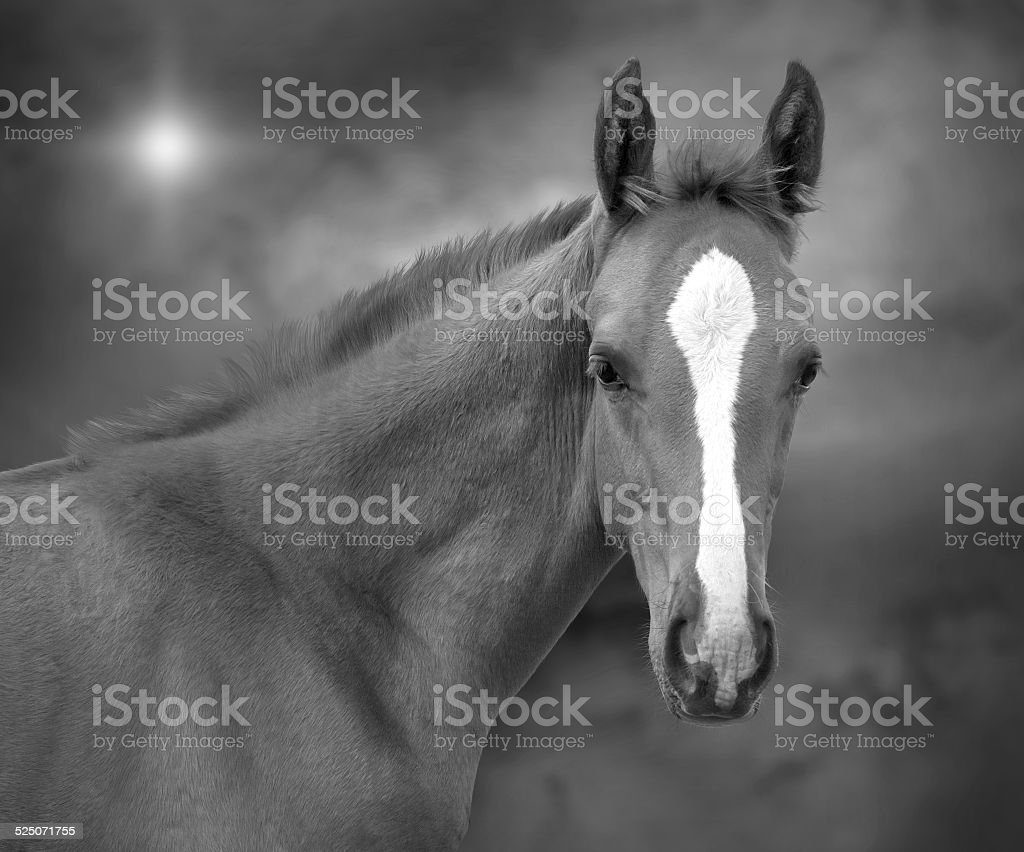Young horse royalty-free stock photo