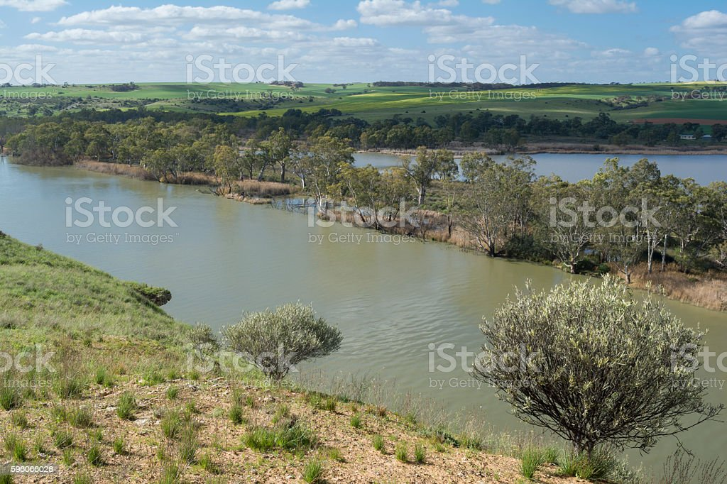 Young Husband, Murray River, South Australia Backed with Green F stock photo