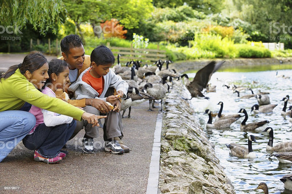 young Indian Family outdoors feeding ducks at the park stock photo