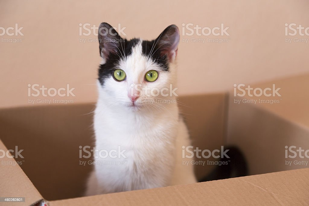 young kitty stock photo
