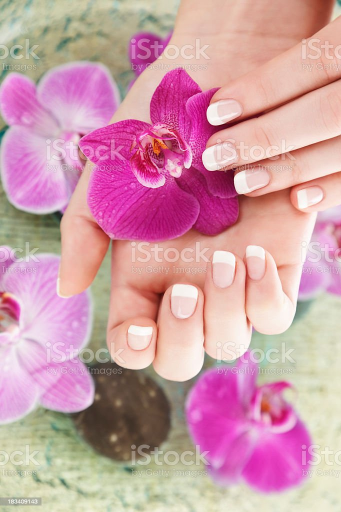 Young ladies hands holding a purple flower stock photo