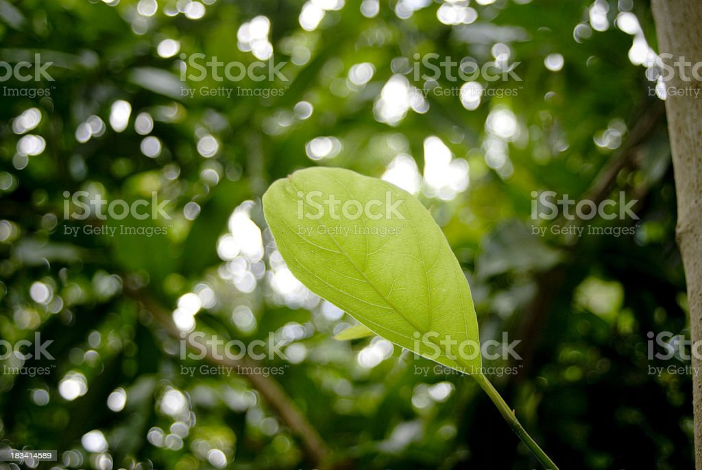 young leaf growth in forest royalty-free stock photo