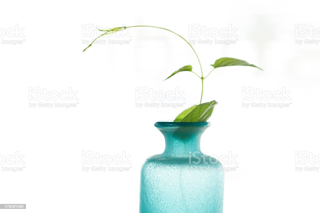 Young leaves in the blue clear bottle stock photo