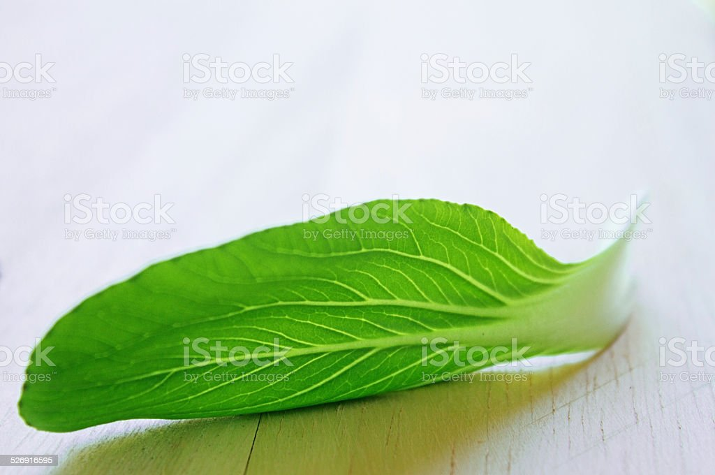 Young leaves of Pak Choi stock photo