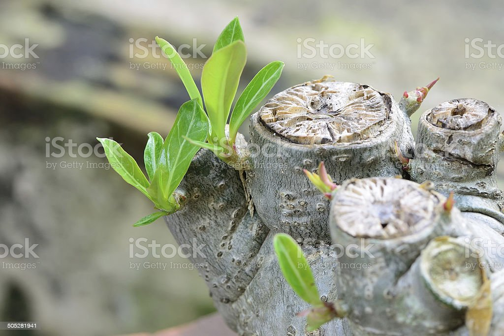 Young leaves on a tree bark stock photo