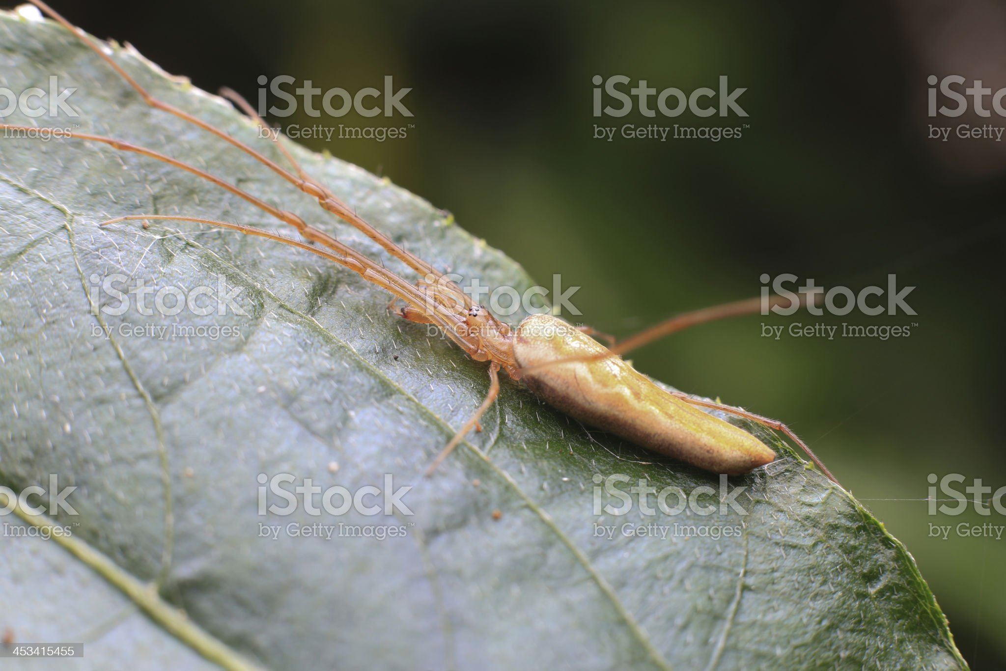Young locust royalty-free stock photo