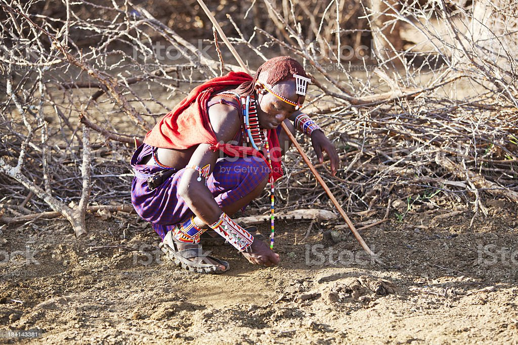 Young maasai examining the ground for tracks. stock photo