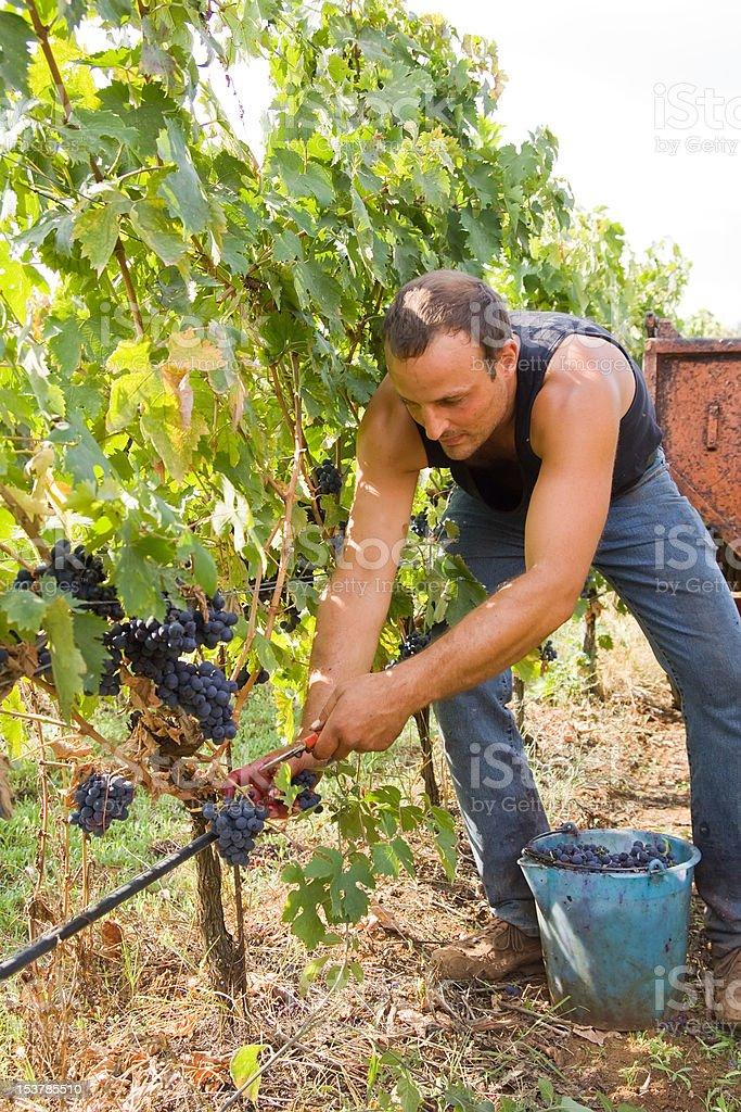 young man farmer royalty-free stock photo