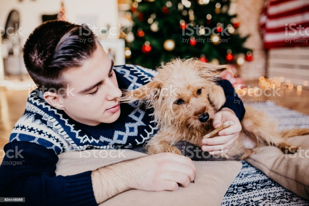 Young man feeding his cute dog in front of Christmas tree. stock photo
