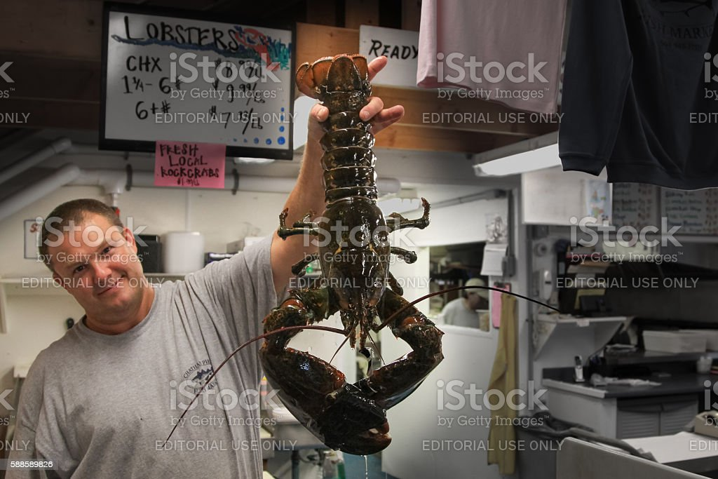 Young Man Holding Live Giant Lobster, Chatham, Cape Cod, Massachusetts. stock photo