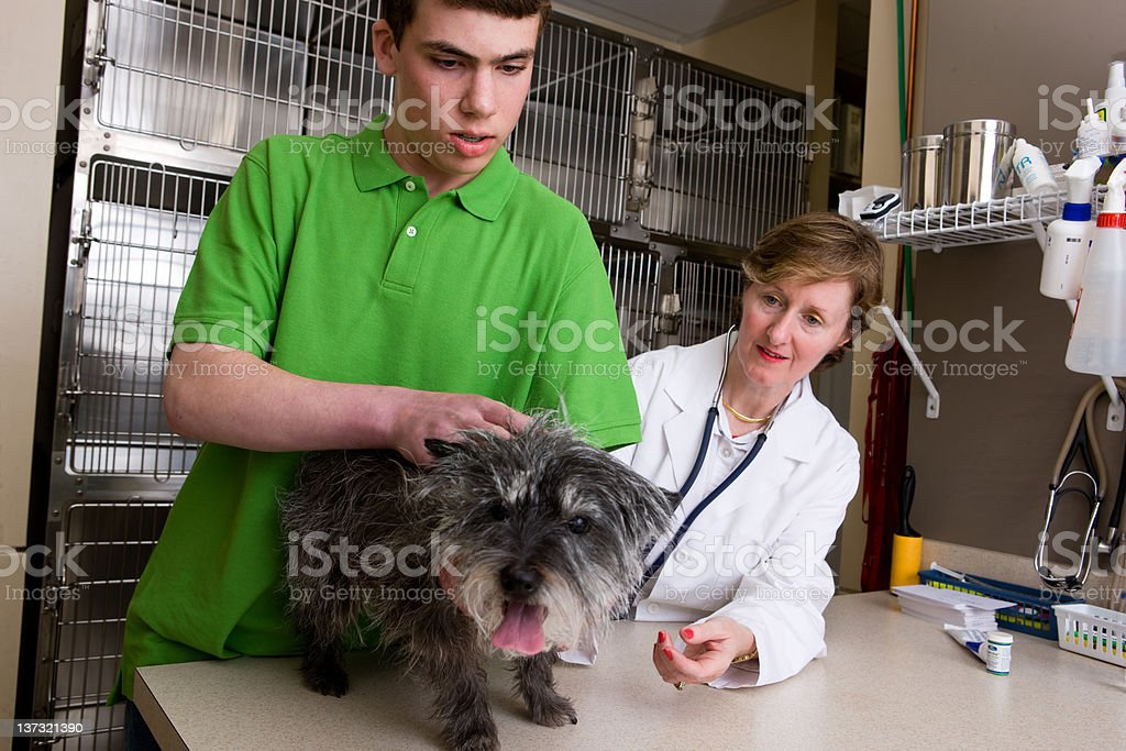 Young Man Holds His Dog For A Woman Veternarian royalty-free stock photo