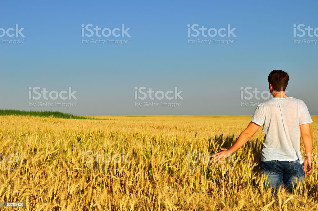 young man in a barley field stock photo