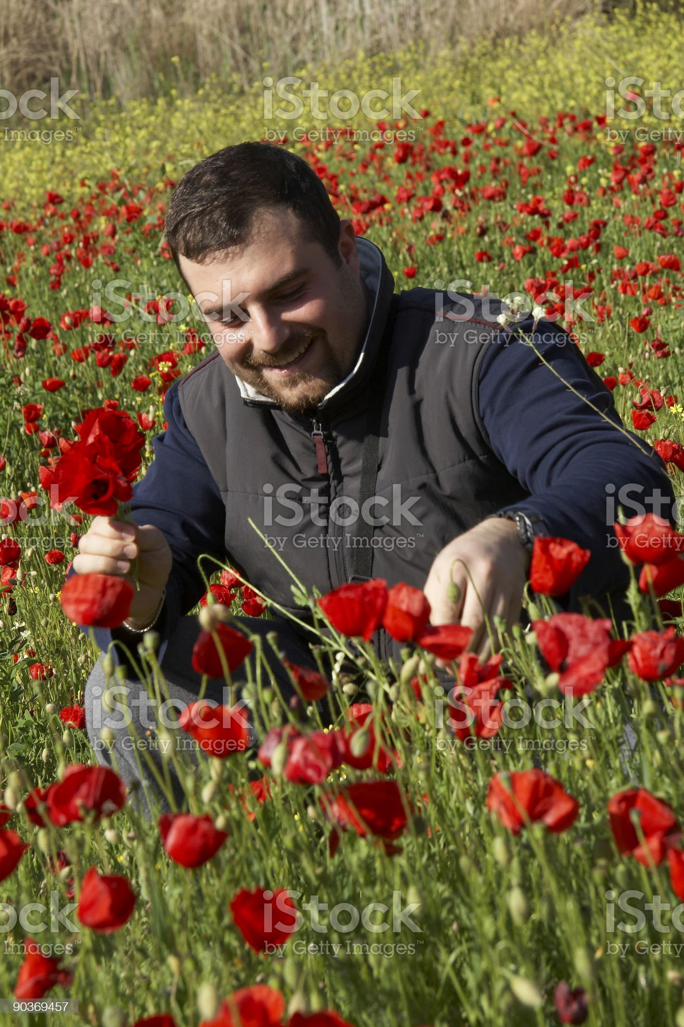 young man in poppy field royalty-free stock photo