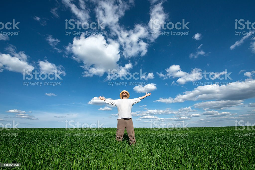 young man on green field of wheat stock photo