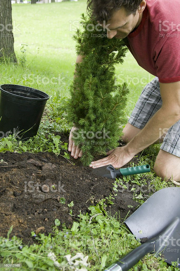 Young Man Planting A Small Tree. royalty-free stock photo