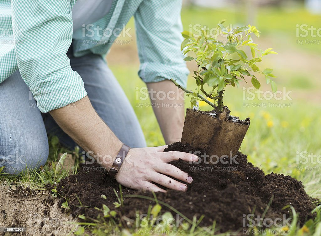Young man planting in the garden stock photo