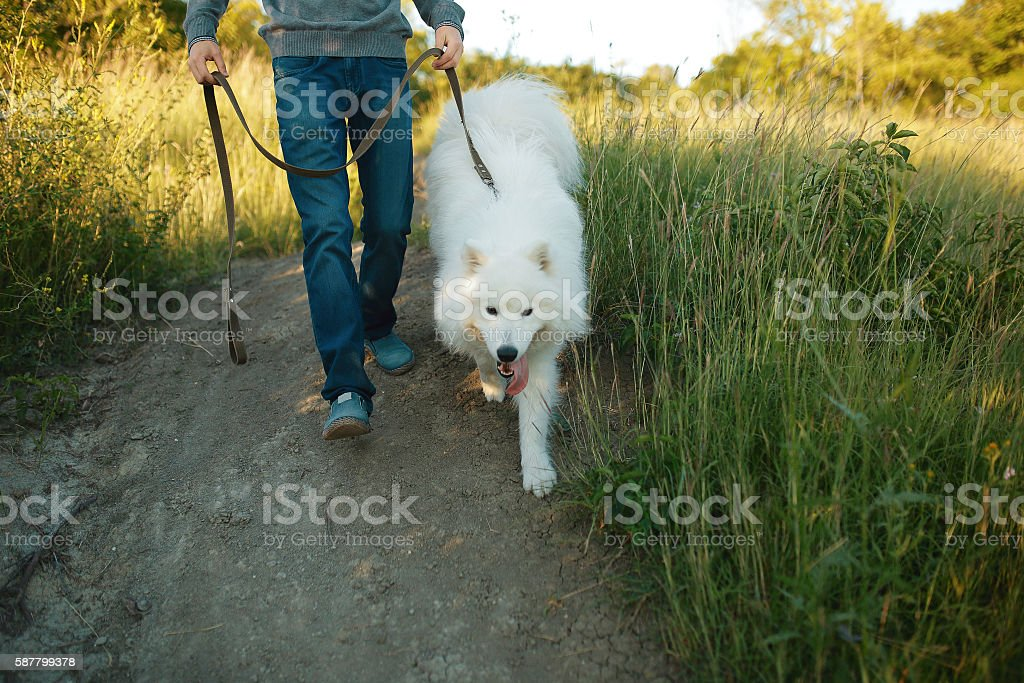 Young man playing with fun dog stock photo