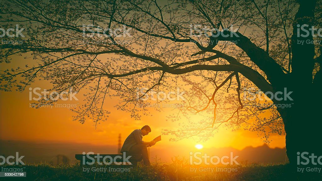Young man reading a book under a tree stock photo