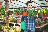 Young man taking care of flowers in greenhouse
