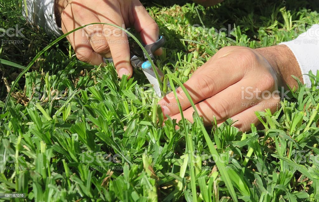 young man trimming grass at home garden stock photo