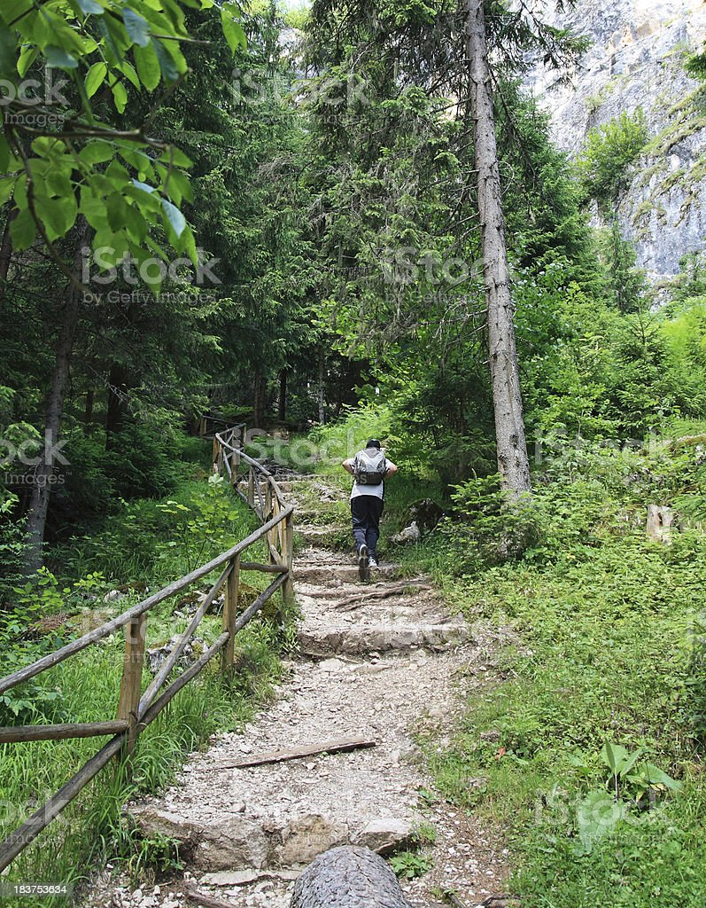 Young  man walk in the forest royalty-free stock photo