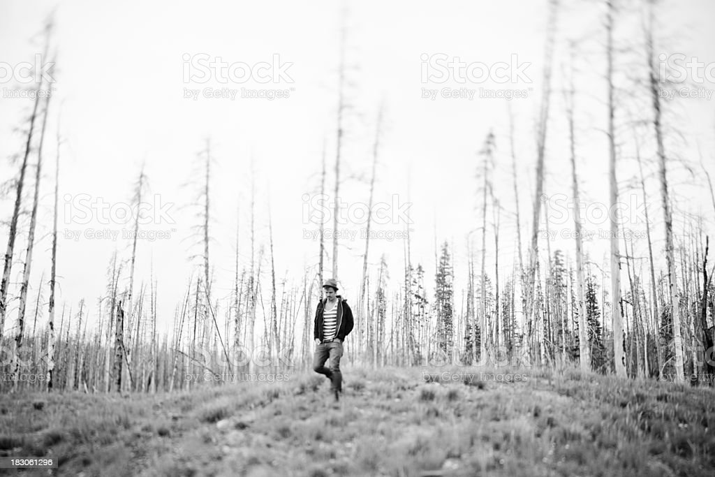 Young man walking alone through a burned down forest royalty-free stock photo