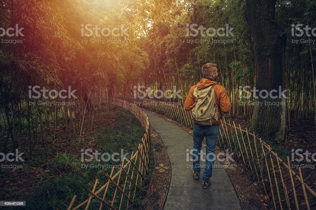 Young man walking in a bamboo grove stock photo