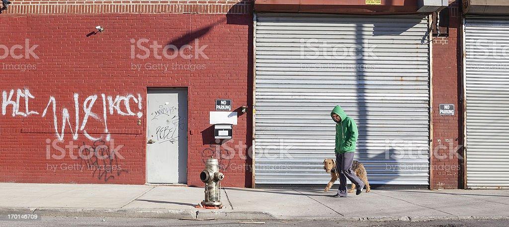 Young man walks dog stock photo