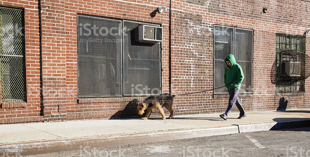 Young man walks dog stock photo
