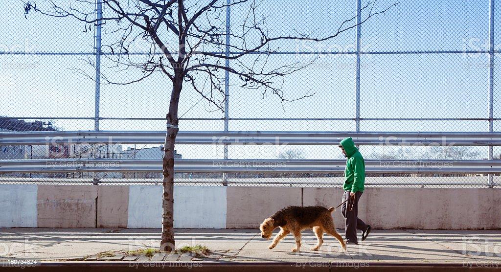 Young man walks dog royalty-free stock photo