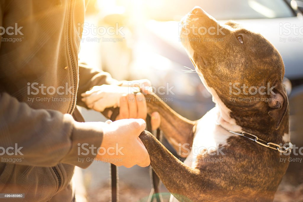 Young Man's Best Friend stock photo