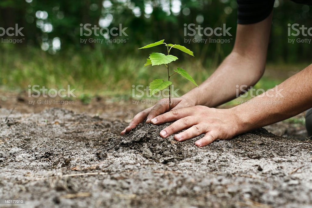 Young man's hands planting tree sapling stock photo
