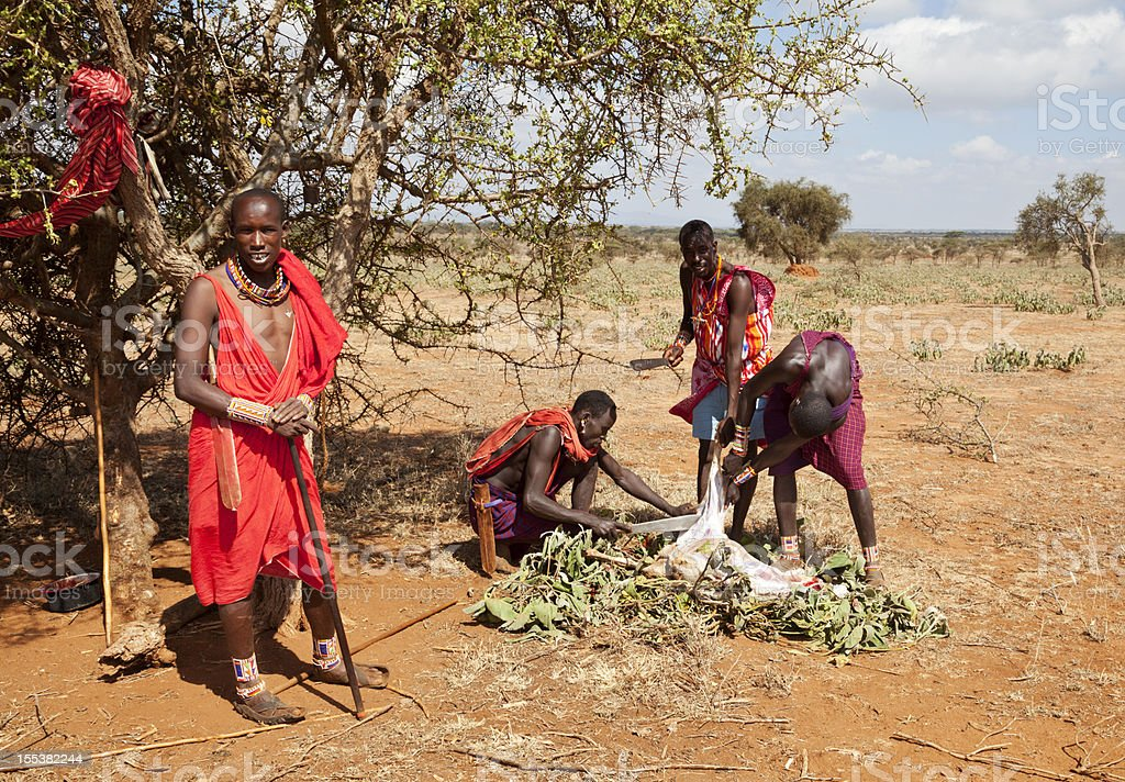 Young masai warriors slaughtering a goat. royalty-free stock photo