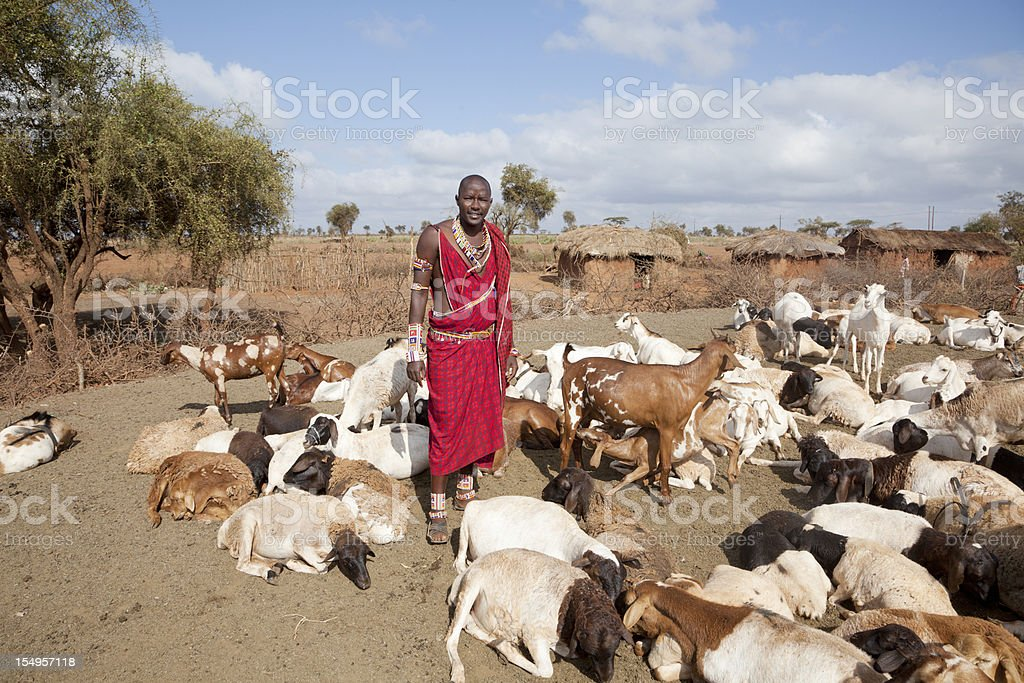 Young massai wih goats, village in background. stock photo