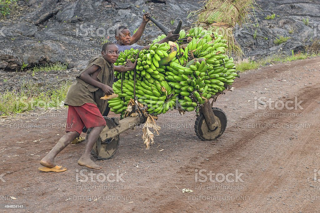 Young men transporting cooking bananas on a roller stock photo