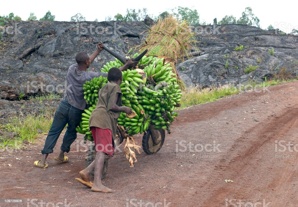 young men with a heavy load of bananas, eastern Congo stock photo