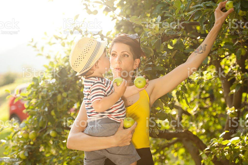 Young Mother and her Son Picking Apples stock photo