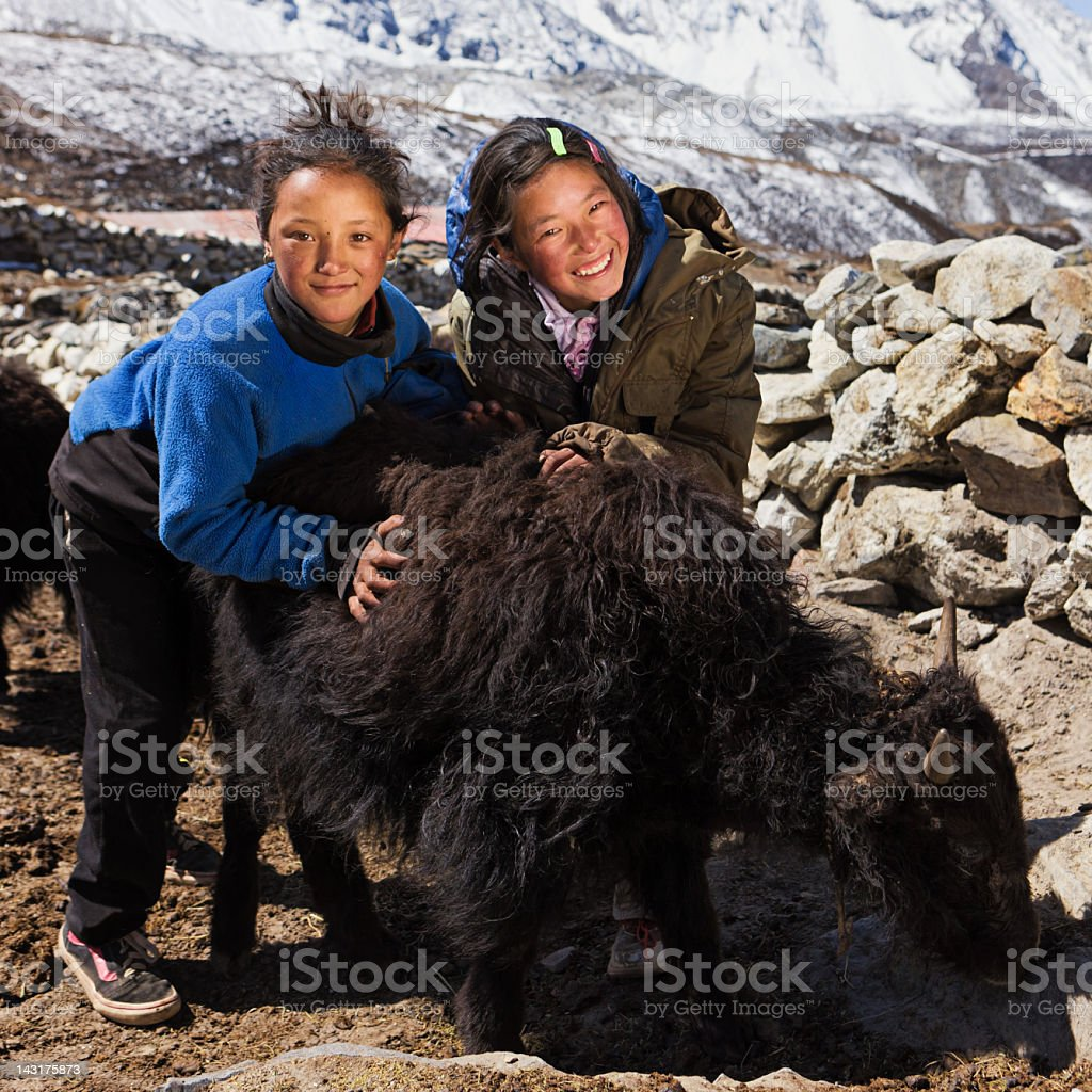 Young Nepali girls playing with yaks stock photo