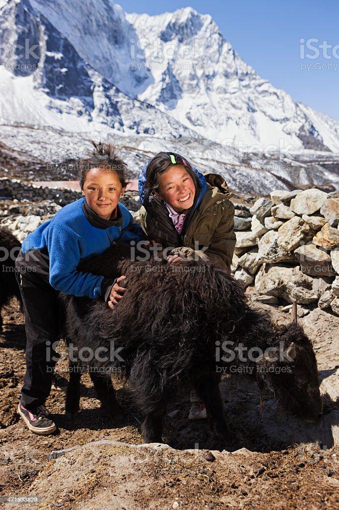 Young Nepali girls playing with yaks stock photo
