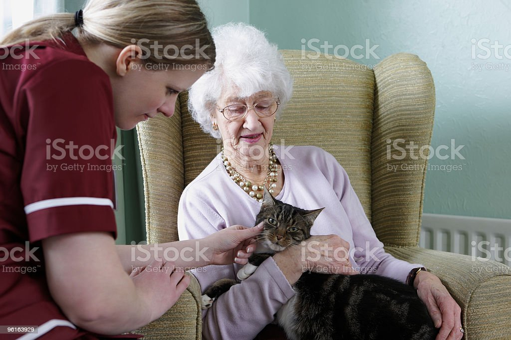 young nurse and senior woman stroking cat in care home stock photo