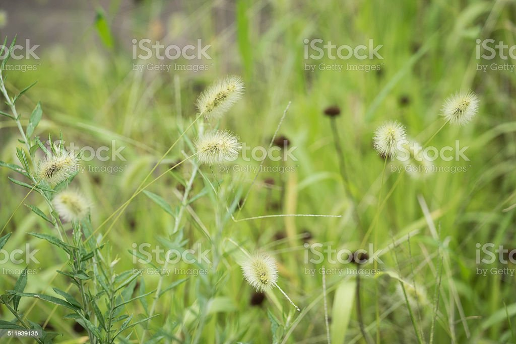 Young ornamental Grasses with Flowers stock photo