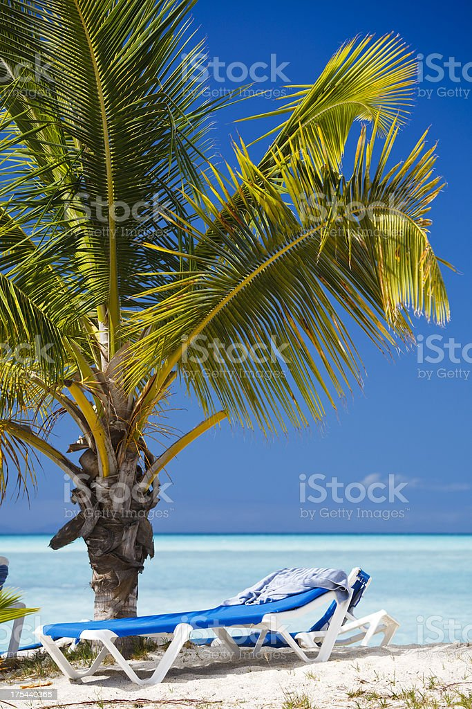 Young Palm Tree On Caribbean Beach royalty-free stock photo